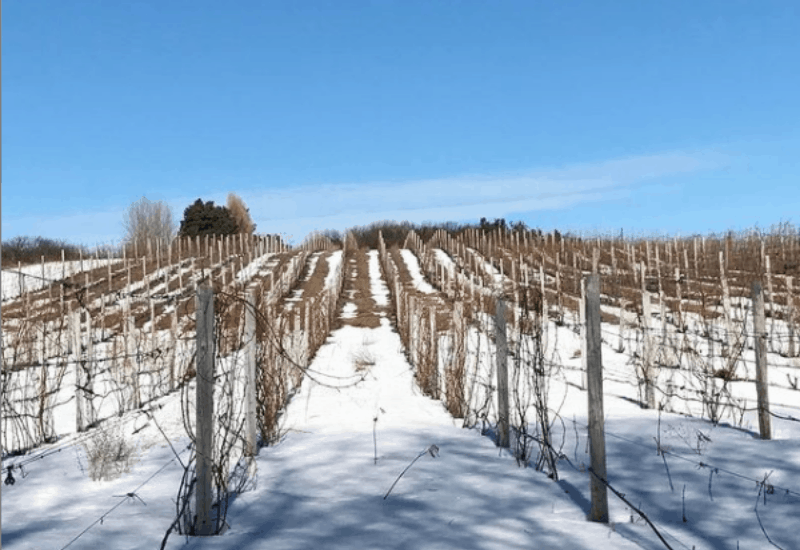 winter at traverse city vineryards