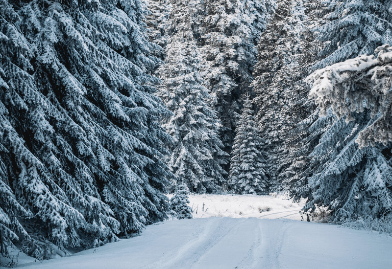 romantic things to do in Michigan in winter