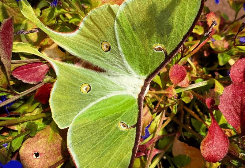 Butterfly House Mackinac Island