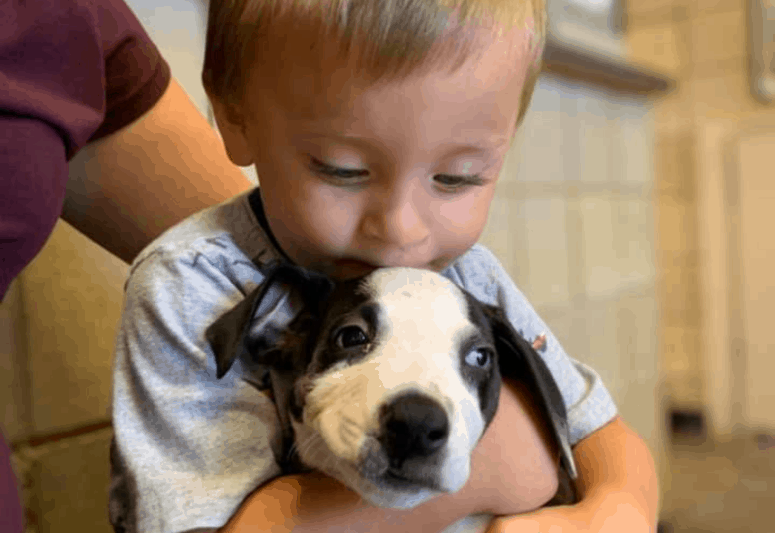 bentley and lacey cleft lip Boy Finds Companion in a Puppy with Shared Birth Mark in Jackson, MI