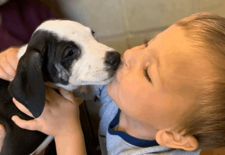 jcas rescue pup Boy Finds Companion in a Puppy with Shared Birth Mark in Jackson, MI