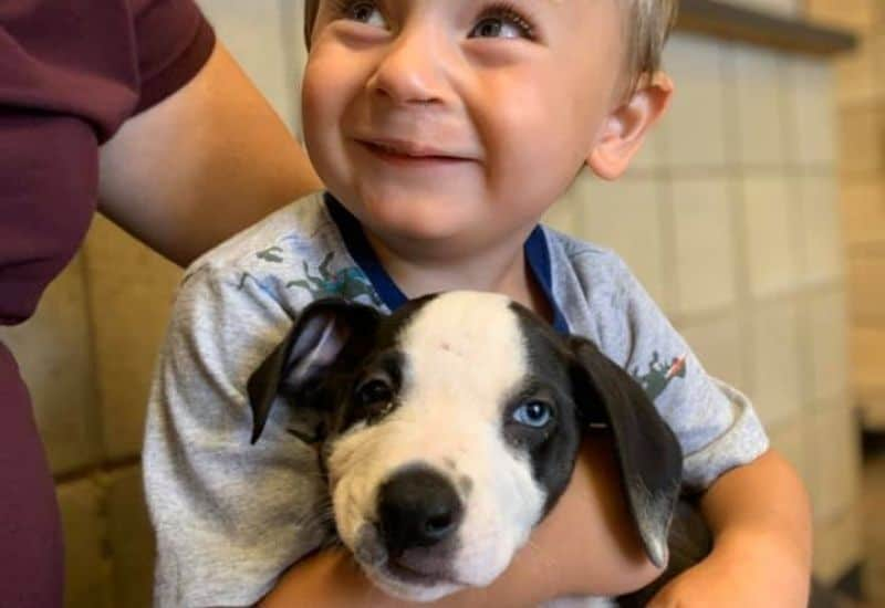 miawesomepeople boy and puppy cleft lip Boy Finds Companion in a Puppy with Shared Birth Mark in Jackson, MI