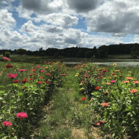 FickFarms natura.leigh .growing Visit Fick Farms for Fresh Produce & U-Pick Flowers