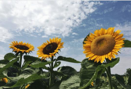 FickFarms wanderinweili 8 Best Summer Things to Do in Michigan's Thumb & Bay Area