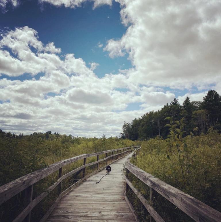 MitchellStatePark fallen231 13+ Top Summer Things to Do in Northern Michigan | Michigan Summer Bucket List Ideas