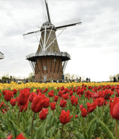 Visit the Netherlands at Windmill Island Gardens