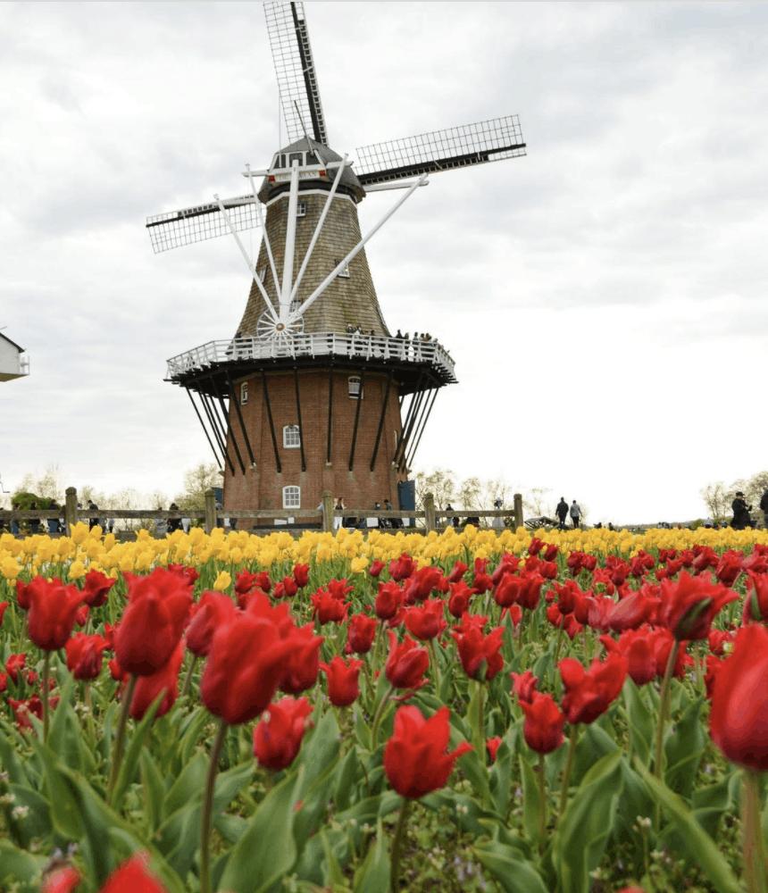 WindmillIslandGardens christiangrubaums Visit the Netherlands at Windmill Island Gardens