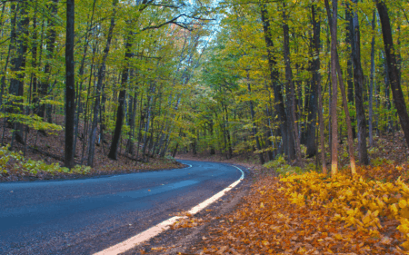 Ultimate Guide to the Jaw-Dropping M-119 Tunnel of Trees Michigan