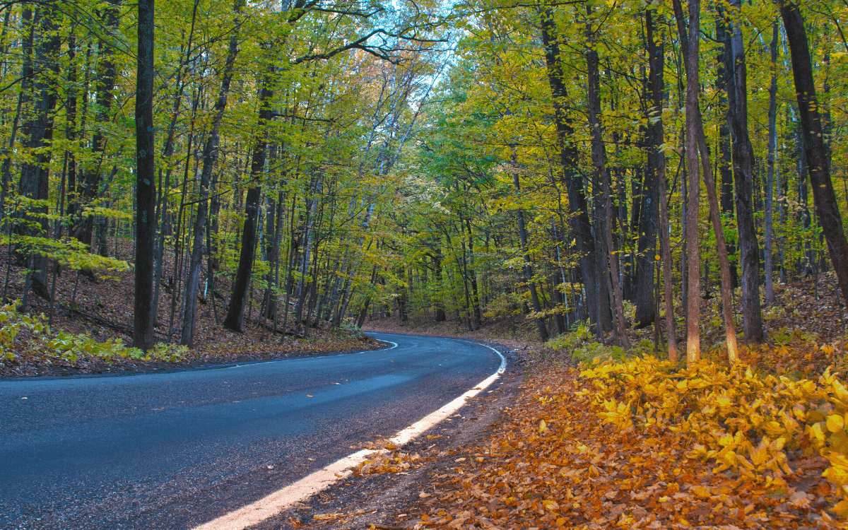 Ultimate Tunnel of Trees Michigan Guide