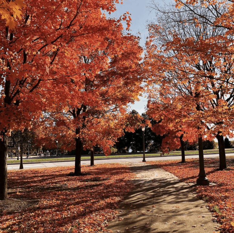 Belle Isle Best Scenic Fall Drives in Michigan For Stunning Color and Views