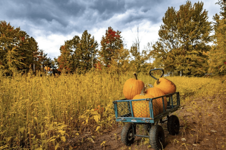 Bethke Farms How to Pick the Perfect Pumpkin in West Michigan