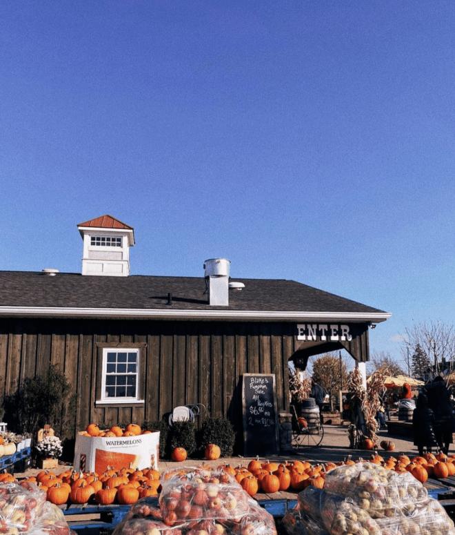 Blakes Orchard Pick the Perfect Michigan Pumpkin | 19 Best Metro Detroit Pumpkin Patches