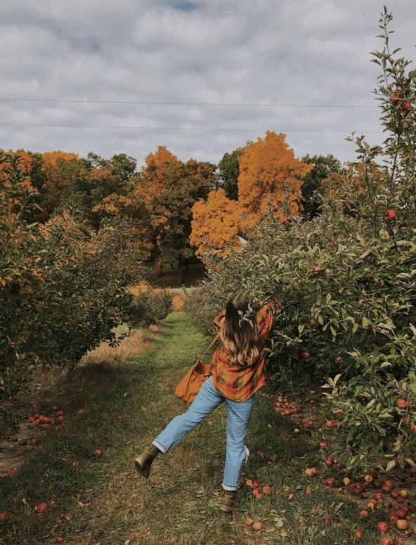 Erwin Orchards Pick the Perfect Michigan Pumpkin | 19 Best Metro Detroit Pumpkin Patches