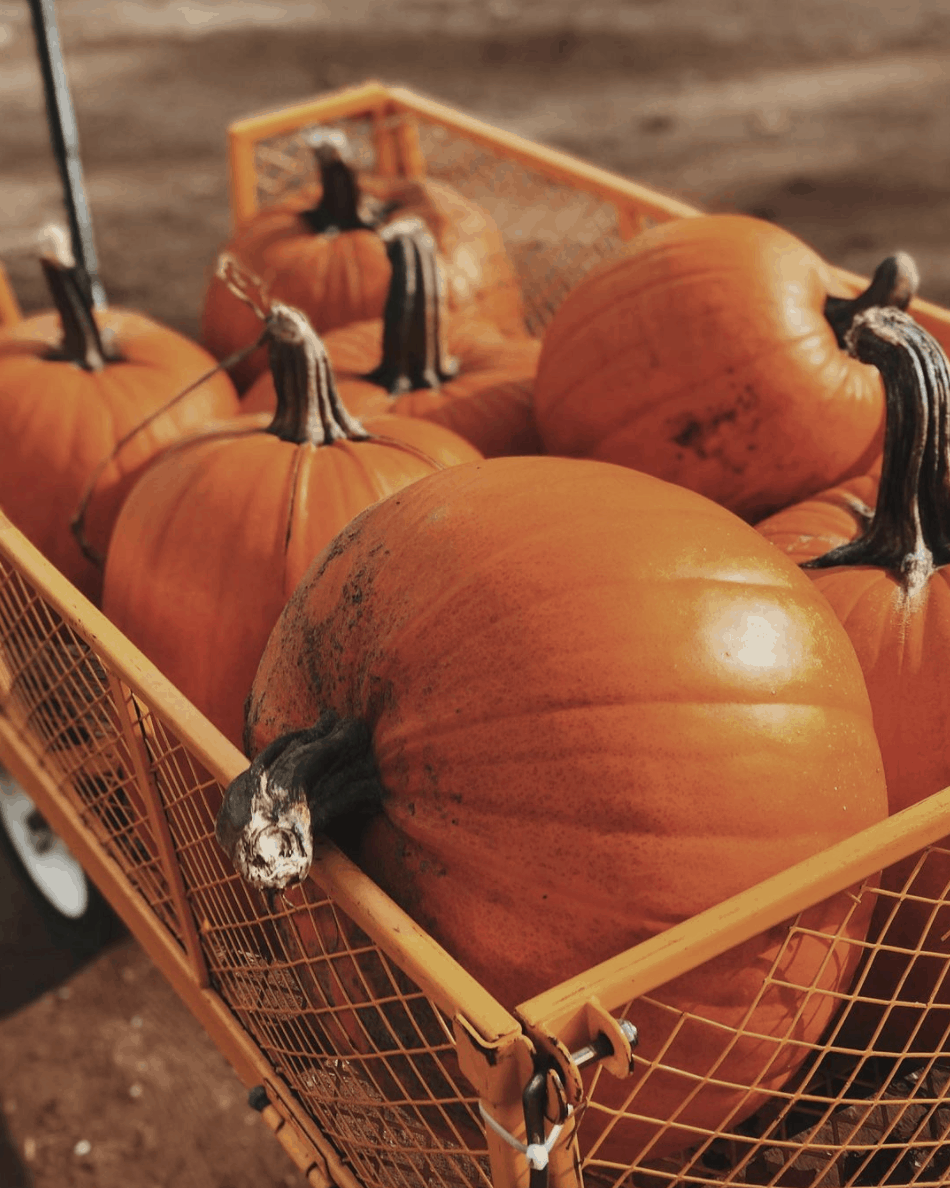 Fleming Farm How to Pick the Perfect Pumpkin in West Michigan