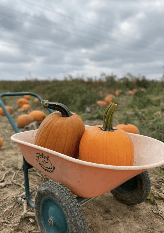 Fruit Ridge Hayrides How to Pick the Perfect Pumpkin in West Michigan