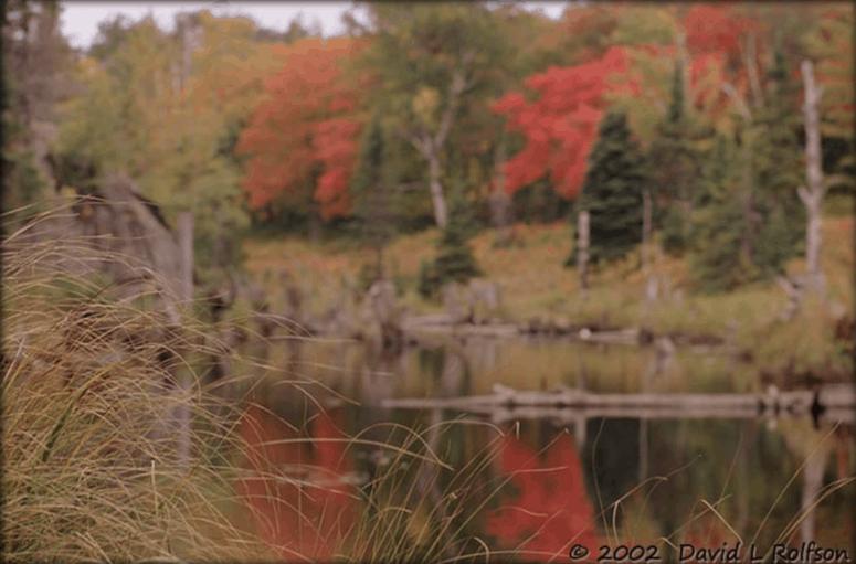 Greenstone Ridge Trail 1 25+ Michigan Hiking Trails for Fall Colors | Best Fall Hiking Trails in Michigan