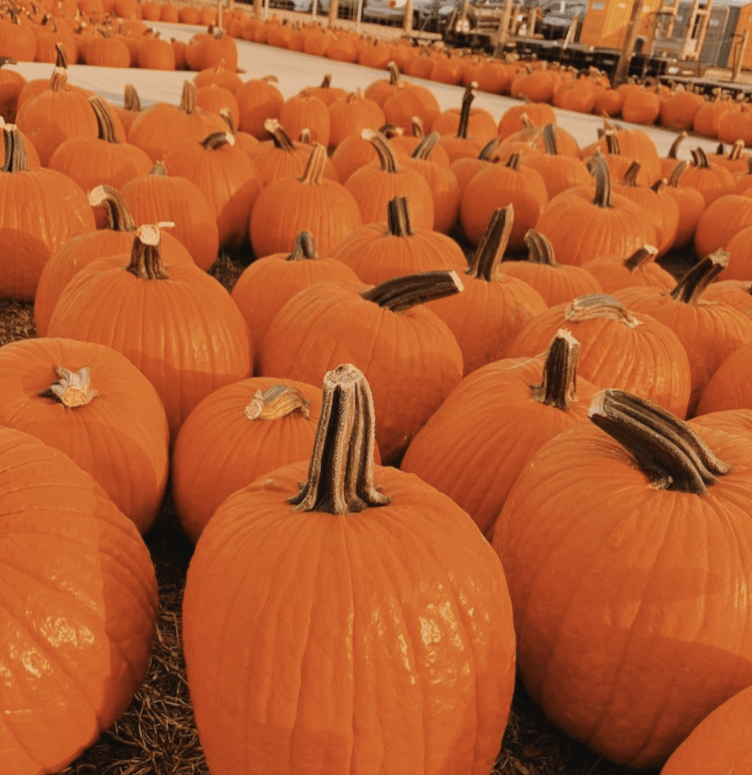 Gull Meadows Farm How to Pick the Perfect Pumpkin in West Michigan