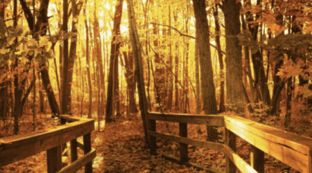 17 Ways to Enjoy Fall in East Michigan This Year [updated 2021]
