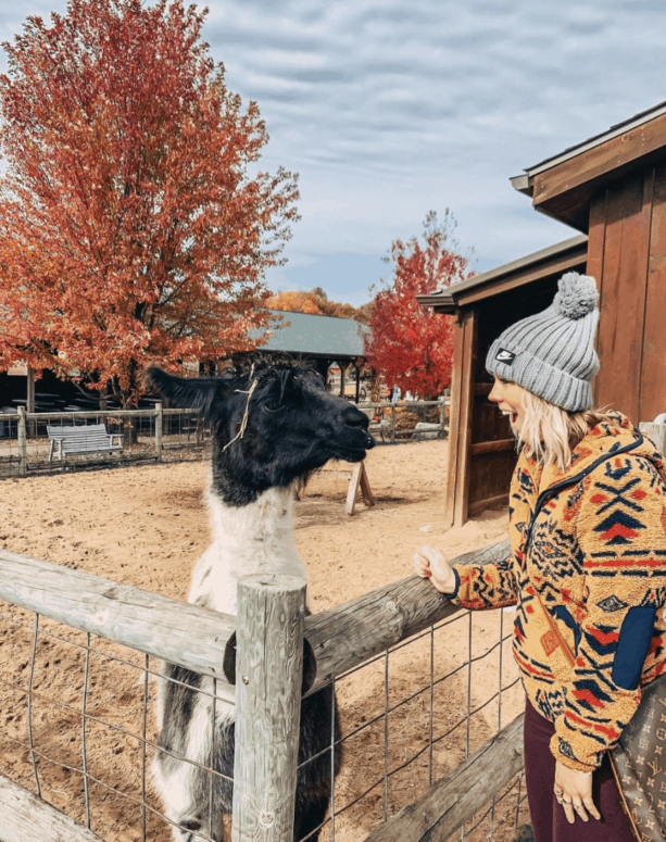 Lewis Adventure Farm and Zoo Top 13 West Michigan Fall Things to Do [in 2021]