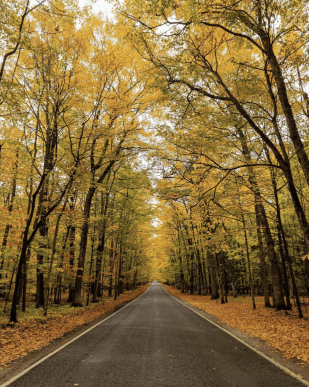 M 119 7 Awesome Fall Color Drives in Northern Michigan