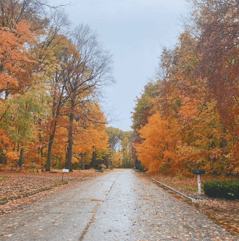 M 15 1 Best Scenic Fall Drives in Michigan For Stunning Color and Views