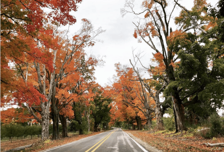M 37 7 Awesome Fall Color Drives in Northern Michigan