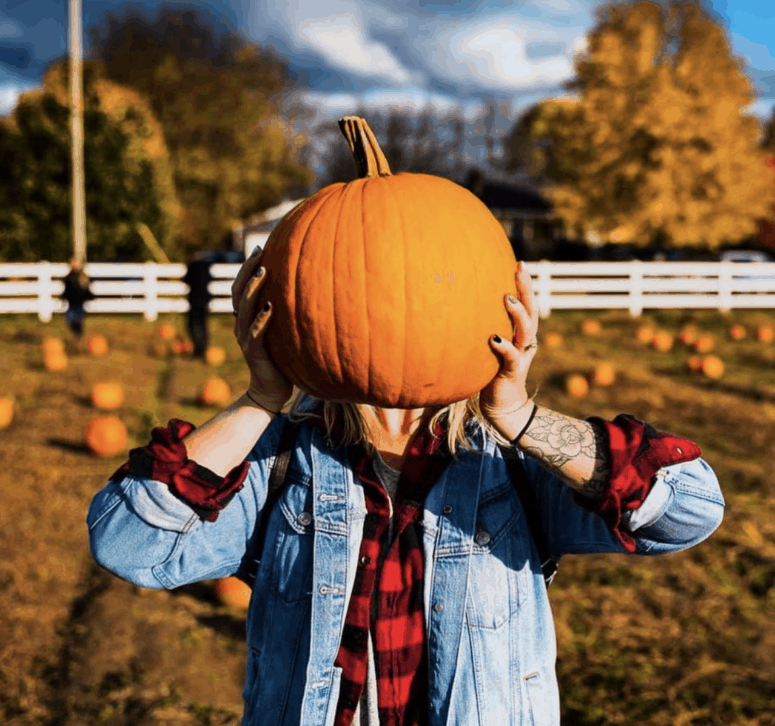 Moelker Orchards How to Pick the Perfect Pumpkin in West Michigan