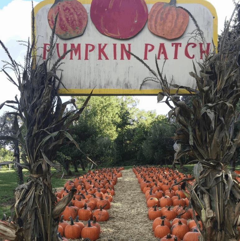 Obstbaum Orchards Pick the Perfect Michigan Pumpkin | 19 Best Metro Detroit Pumpkin Patches