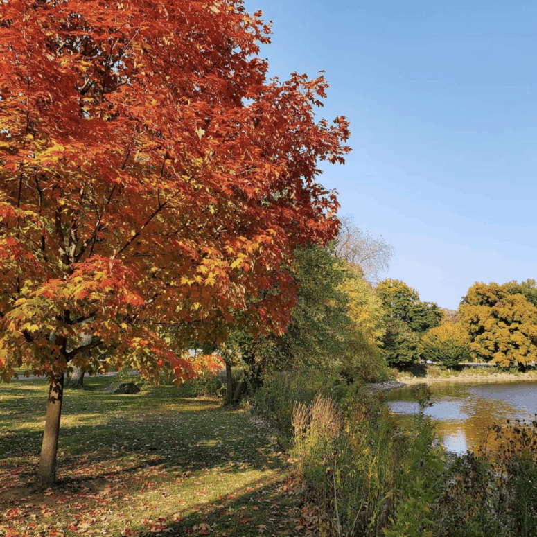 Old U.S. Highway 27 1 7 Can't-Miss Colorful Scenic Drives in West Michigan This Fall