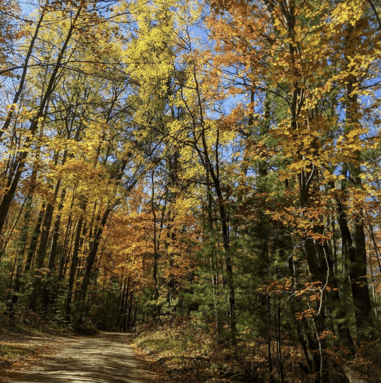 Old US 27 7 Awesome Fall Color Drives in Northern Michigan