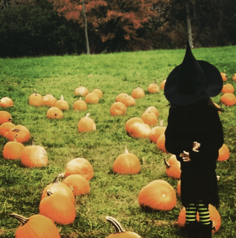 Plymouth Orchards 2 Best Fall Things to Do in Metro Detroit [updated 2021]