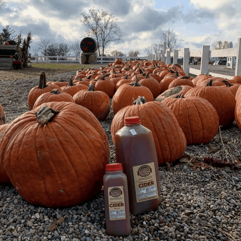 Plymouth Orchards Pick the Perfect Michigan Pumpkin | 19 Best Metro Detroit Pumpkin Patches