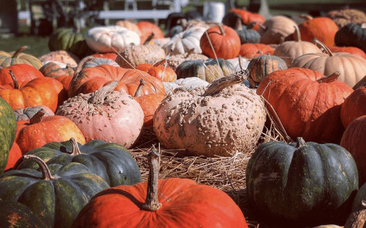 The Pumpkin Factory Pick the Perfect Michigan Pumpkin | 19 Best Metro Detroit Pumpkin Patches