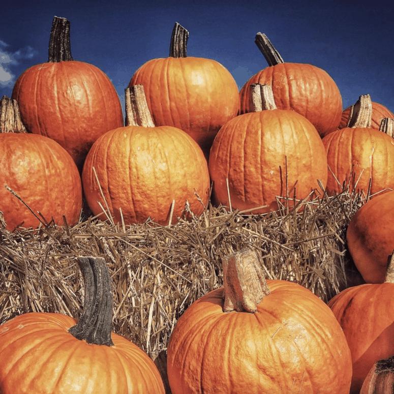 Trabbic Pumpkin Farm Pick the Perfect Michigan Pumpkin | 19 Best Metro Detroit Pumpkin Patches