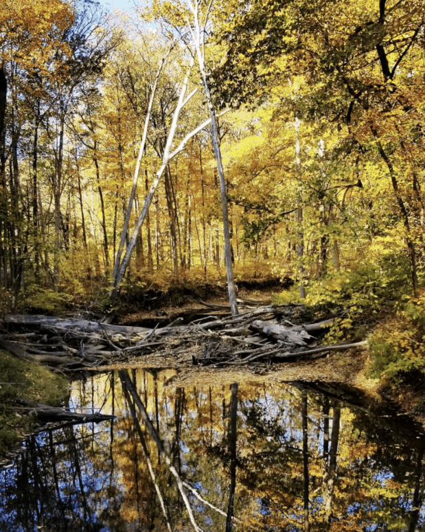 Warren Woods State Park 25+ Michigan Hiking Trails for Fall Colors | Best Fall Hiking Trails in Michigan