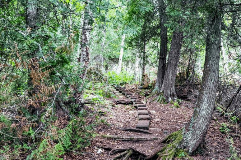 Wooden Plans on the Feldtmann Trail at Isle Royale National Park