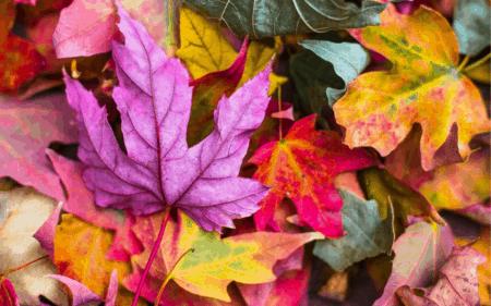 10 Reasons Why You Should NOT Visit Michigan This Fall