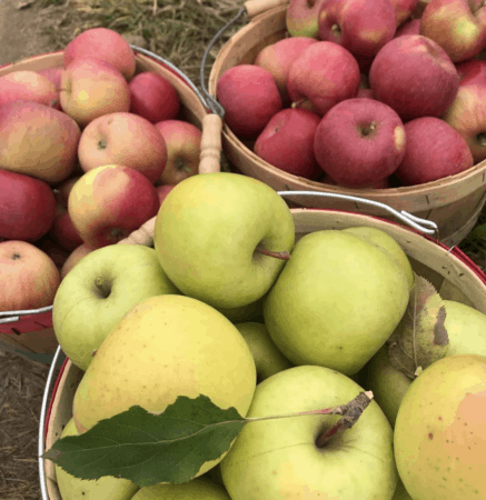 11 Amazing Michigan Cider Mills & Apple Orchards in East Michigan