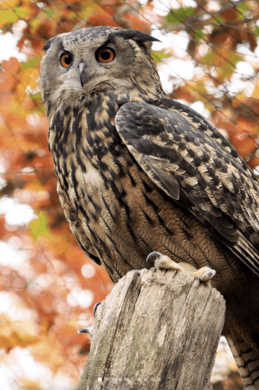 Fall Zoo tacular 14 Best Fall Things to Do in Mid-Michigan | Lansing, Frankenmuth, Flint, Midland, and More