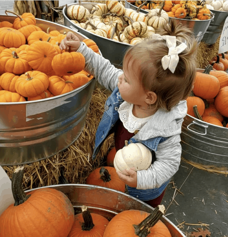 Flushing Farms 14 Best Fall Things to Do in Mid-Michigan | Lansing, Frankenmuth, Flint, Midland, and More
