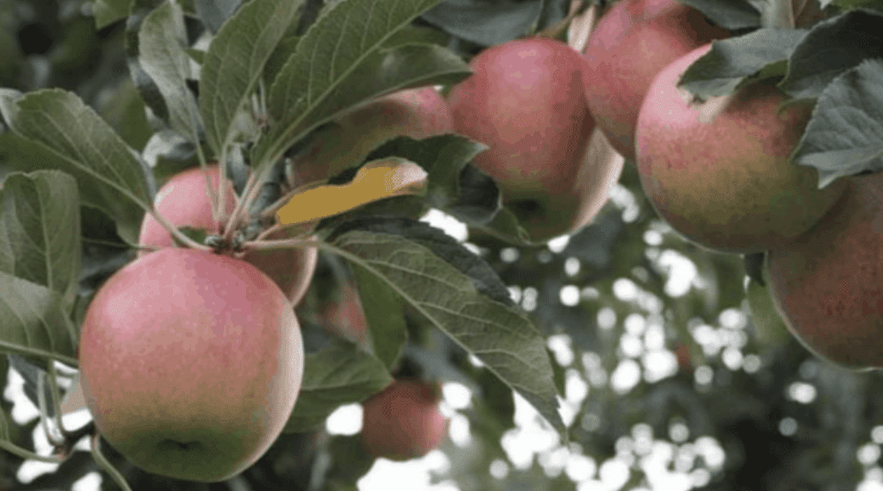 Gleis Orchards And Greenhouses 2 Munch & Crunch: Top 12 Apple Orchards & Cider Mills in Southcentral Michigan | Jackson, Hillsdale, Washtenaw, and Lenawee Counties