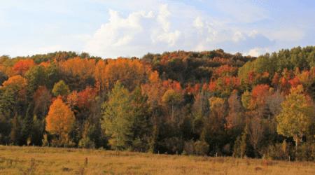 Experience a Virtual Fall Color Tour in Leelanau County [PHOTOS]