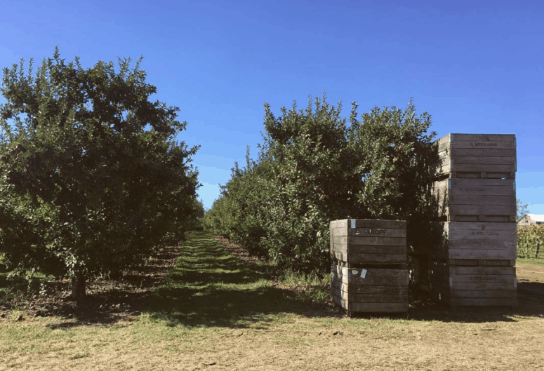 Nyes Apple Barn Plan a West Michigan Apple Orchard Tour this Fall | 10 Can't-Miss Apple Orchards in West Michigan