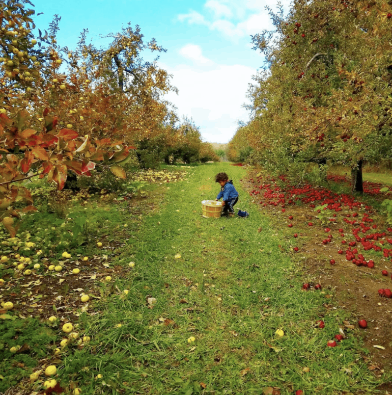 Phillips Orchard and Cider Mill Crunch & Munch, Sip & Savor: 10 Amazing Mid-Michigan Apple Orchards & Cider Mills to Visit This Fall [updated 2021]