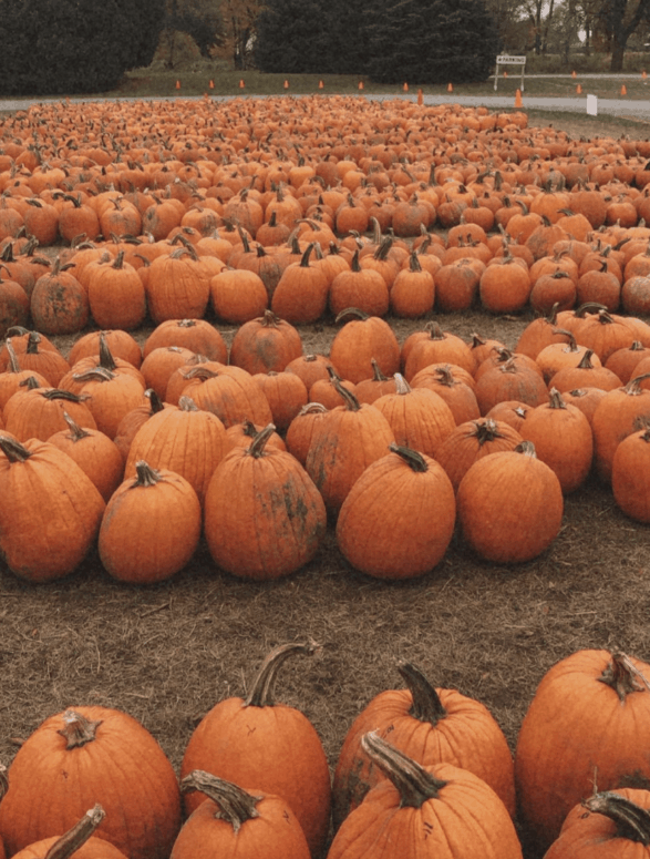 Pumpkin Patch Johnsons Giant Pumpkins 22 of the Best Unique Fall Things to Do Right Here in Michigan This Year