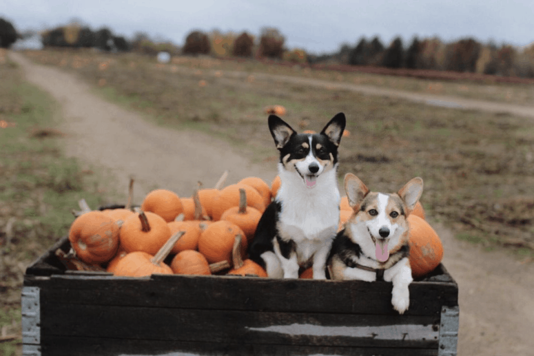 Uncle Johns Cider Mill 3 14 Best Fall Things to Do in Mid-Michigan | Lansing, Frankenmuth, Flint, Midland, and More