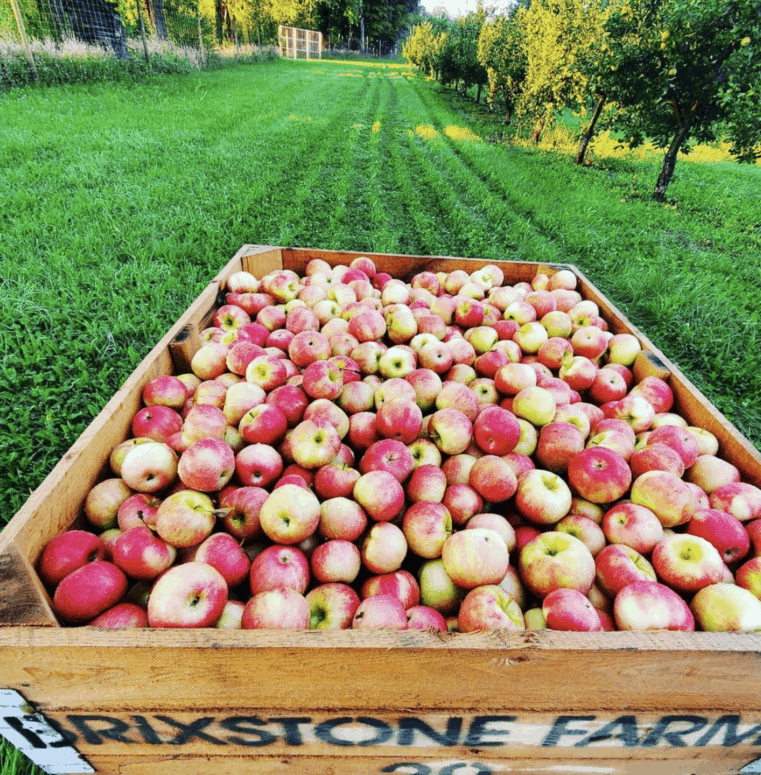 Brixstone Farms Top 10 Northern Michigan Apple Orchards & Cider Mills in 2021