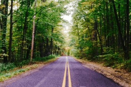 Kalamazoo Michigan Fall Color Tour: 4 Can't-Miss Roads for a Fall Scenic Drive in West Michigan