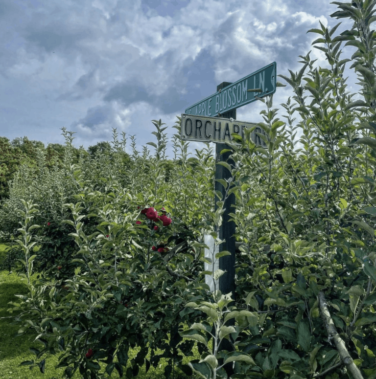 Knaebes Apple Farm And Ciderworks 1 Top 10 Northern Michigan Apple Orchards & Cider Mills in 2021