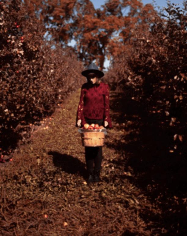 Rennie Orchards Top 10 Northern Michigan Apple Orchards & Cider Mills in 2021